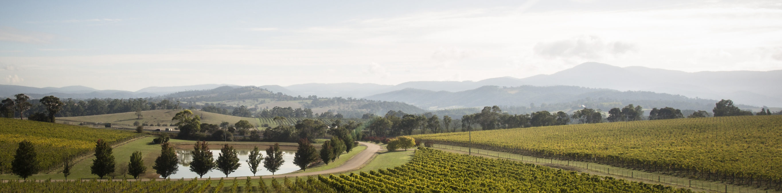 Oakridge_Coldstream_Winery_med res